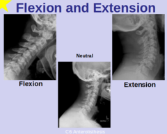 FLEXION & EXTENSION