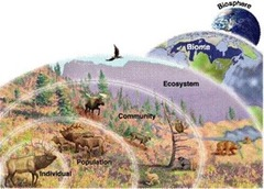 A group of ecosystems that have the same climate and dominant communities