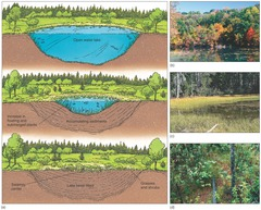 ecosystem succession essay Essay ecosystem engineering is one factor in the realm of ecology,  an examination of primary ecosystem succession and secondary ecosystem succession.