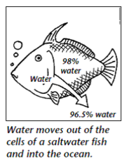 how water crosses the cell membrane