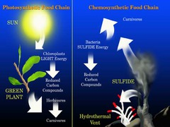 process by which organisms use chemical energy to produce carbohydrates.