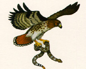 Quaternary Consumers  SENTENCE: Example of Quaternary consumers are :Hawk and a Killer Whale