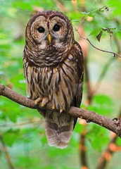 Trophic Levels  SENTENCE:  the owl trophic level consists of plants, insects and rodents.