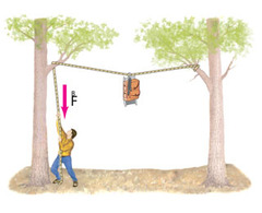A bear sling, shown in (Figure 1) , is used in some national parks for placing backpackers' food out of the reach of bears. As the backpacker raises the pack by pulling down on the rope, the force F needed: a. doesn't change b. increases until the rope is straight c. decreases as the pack rises until the rope is straight across d. increases but the rope always sags where the pack hangs