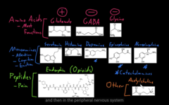 Amino acids, monoamines, peptides and other NT's.