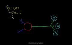 Chemical synapse has a gap