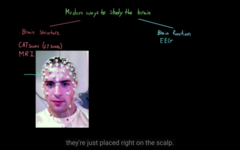 Different ways to see the function of the brain  EEG