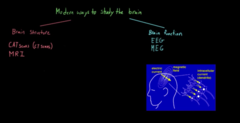 Different ways to see the function of the brain  MEG