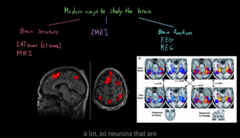 Different ways to see the structure/function of the brain  FMRI