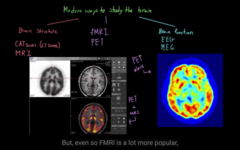Different ways to see the structure/function of the brain  PSCAN