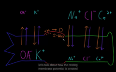 Electrical vs. chemical gradient