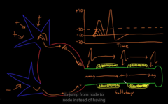How the action potential takes place across an axon