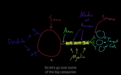 large axons gets covered by myeline,  take a careful look at the image!