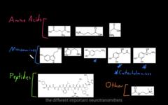 NT peptides