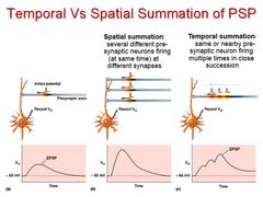 temporal vs. spatial summation
