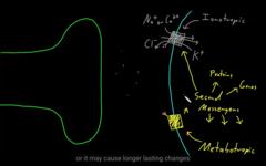 The interaction of metabotropic vs. inotropic